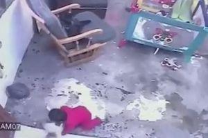 Mèo cứu đứa bé khỏi pha rơi cầu thang một cách ngoạn mục