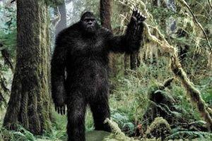 Vì sao Bigfoot là bí ẩn khó giải nhất mọi thời đại?