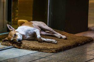 Bị nhốt ngoài, chó thông minh nghĩ cách khiến chủ mở cửa cực lạ