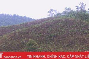 Nguy cơ tranh chấp đất rừng khi '2 người 1 sổ đỏ' ở huyện miền núi Hà Tĩnh