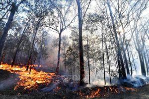 Cháy rừng tại Australia gây thiệt hại nghiêm trọng