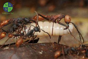 Clip: Điểm danh 10 'gương mặt vàng' trong làng kiến độc có thể bạn chưa biết