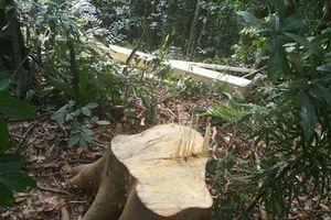 Quảng Trị: Trưởng phòng bảo vệ rừng bị kẻ lạ mặt hành hung tại trụ sở