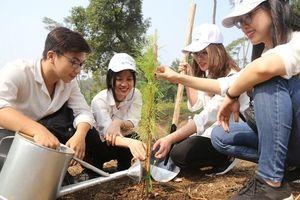 Trồng mới 2.000 cây xanh tại Khu Di tích Đá Chông