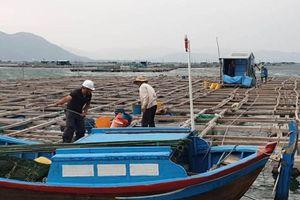 Cưỡng chế người trên bè vào bờ tránh bão số 6 ở Phú Yên