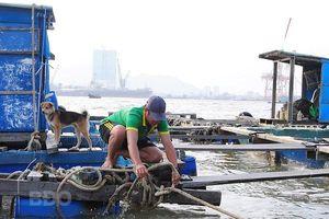 Bình Định: Sẵn sàng ứng phó bão số 6, đảm bảo an toàn cho ngư dân, tàu cá