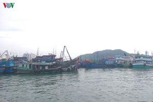 Khánh Hòa cấm biển từ 12h, sơ tán lao động trên các bè nuôi thủy sản