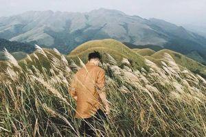'Sống lưng khủng long' Bình Liêu đang vào mùa cỏ lau đẹp như một giấc mơ, xem ảnh chỉ biết ôm mộng được đến 1 lần!