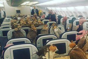 Cho chim ưng đi máy bay, giới siêu giàu Arab chơi trội