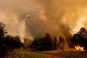 Australia ban bố tình trạng khẩn cấp do cháy rừng nghiêm trọng