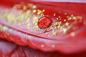 Nhóm máu Rhnull quý như vàng ròng, chỉ 43 người trên thế giới sở hữu