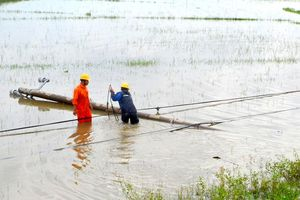 Điện lực miền Trung xử lý sự cố lưới điện sau bão số 6