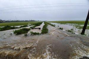 Đắk Lắk ngập nặng sau bão, 300 hộ dân di dời khẩn cấp, nguy cơ vỡ đập thủy lợi