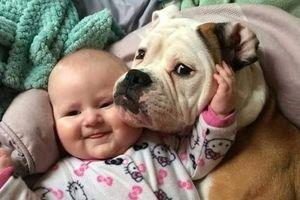 'Tan chảy' với hình ảnh tình bạn ấm áp giữa trẻ và thú cưng