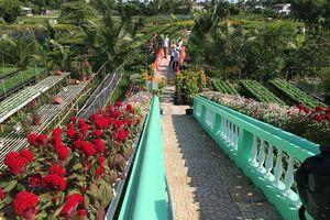Các địa phương phía Nam tập trung chăm sóc cho vụ hoa Tết Canh Tý