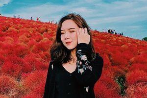 Đồi cỏ ở Nhật Bản đồng loạt chuyển màu đỏ rực cuối thu