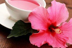 Phát hiện mới về khả năng chữa ung thư vú của hoa dâm bụt