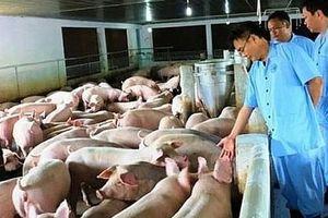 Hà Nội có 275 xã, phường và 6 quận qua 30 ngày không phát sinh lại dịch tả lợn châu Phi