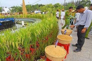 Hơn 800 gian hàng tham gia Festival Lúa gạo Việt Nam lần IV
