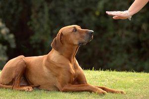 Khoa học chứng minh chúng ta không nên mắng chó