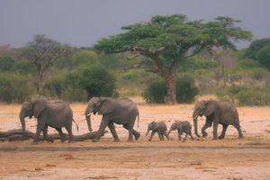 Hạn hán nghiêm trọng đe dọa xóa sổ động vật hoang dã châu Phi