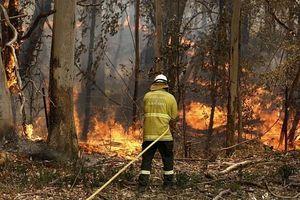 Australia: Rơi trực thăng chữa cháy rừng, phi công may mắn thoát nạn