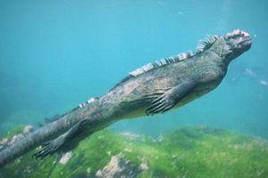 Cận cảnh cự đà khổng lồ bơi như rắn dưới biển