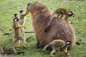 Chân dung loài động vật thân thiện nhất thế giới