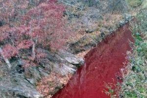 Dòng sông nhuộm đỏ màu máu lợn bệnh