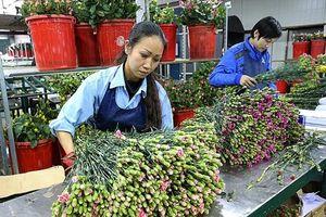 Vì sao hoa Việt chưa thể đi xa?