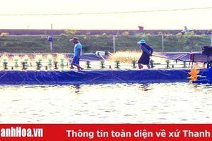 Phát triển các mô hình sản xuất nông nghiệp đạt hiệu quả kinh tế cao tại huyện Tĩnh Gia