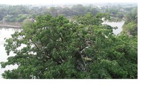 Đàn chim cổ rắn quý hiếm bất ngờ bay về trú ngụ tại Đồng Nai