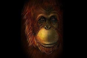 Phục dựng loài linh trưởng khổng lồ từ hóa thạch 1,9 triệu năm