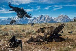 Những khoảnh khắc sống động có '1-0-2' trong thế giới động vật