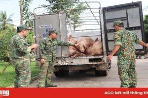 Tiêu hủy hơn 1,6 tấn lợn vận chuyển từ Campuchia vào Việt Nam