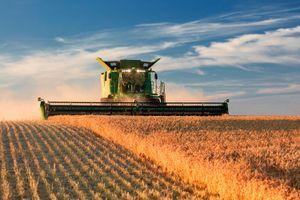 Giá nông sản giảm do thị trường lo ngại triển vọng thỏa thuận thương mại Mỹ - Trung