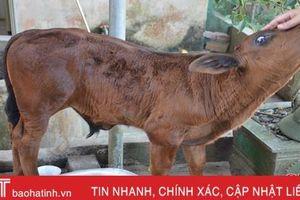 327 con gia súc tại 7 huyện, thị Hà Tĩnh 'dính' lở mồm long móng
