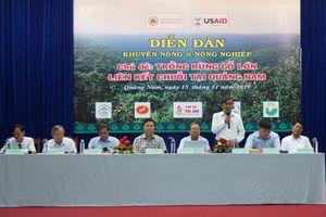 Quảng Nam liên kết trồng rừng gỗ lớn