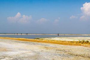 Ấn Độ: Hơn 2.000 con chim chết bên hồ muối không rõ lý do