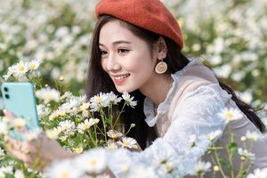 Giới trẻ mê mẩn 'check-in' bên vườn cúc họa mi lớn nhất Hà Nội
