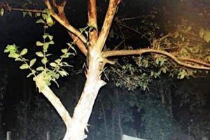 Đắk Lắk: Một người phụ nữ treo cổ trên cây ổi tử vong