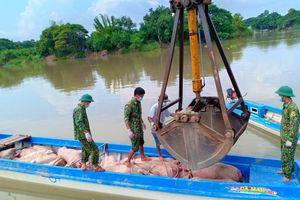 Tiếp tục bắt giữ và tiêu hủy 30 con lợn thịt nhập lậu từ Campuchia vào Việt Nam