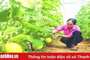 Nông nghiệp công nghệ cao ở huyện Hoằng Hóa – chuyện những người tiên phong
