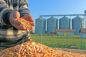 Giá nông sản biến động nhẹ chờ diễn biến thỏa thuận thương mại Mỹ - Trung