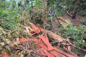 Quảng Trị: 2 cán bộ Kiểm lâm bị kỷ luật vì để xảy ra phá rừng
