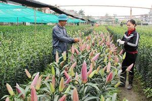 Quảng Ninh: Kinh tế tập thể nở rộ, HTX đóng vai trò nòng cốt xây dựng nông thôn mới