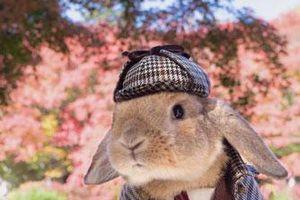 Chú thỏ phong cách nhất thế giới 'đốn tim' dân mạng