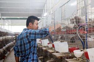 Quảng Ninh: Du học ở Úc 4 năm, chàng trai về nước nuôi chim