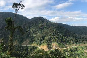 Gian nan công tác giữ rừng