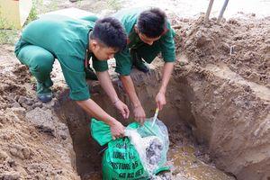 BĐBP Cà Mau tiêu hủy gần 100kg hải sâm dừa